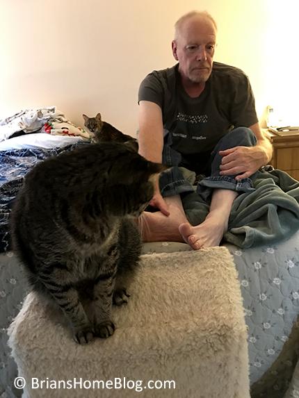 T.G.I.F. brian 11172017 - Brian's Home, adopt cats, we deserve it!