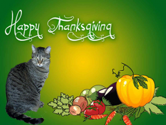 thanksgiving 2017 - Brian's Home, adopt cats, we deserve it!