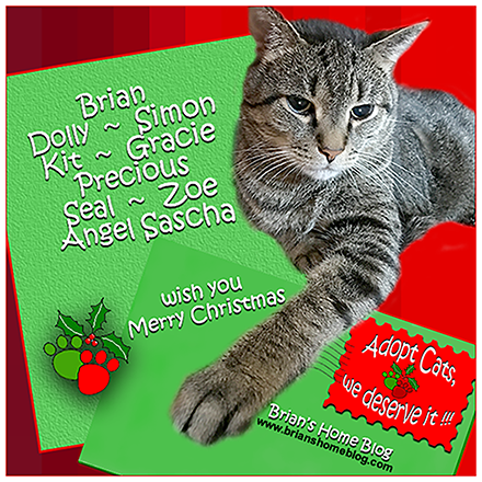 Merry Christmas from Brian's Home - Brian's Home, adopt cats, we deserve it!