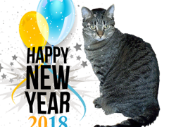 happy new year brian 01012018 - Brian's Home, adopt cats, we deserve it!