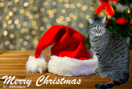 Merry Christmas 2017 - Brian's Home, adopt cats, we deserve it!
