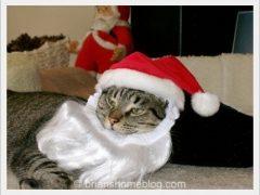 santa brian holiday 12242017 - Brian's Home, adopt cats, we deserve it!
