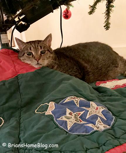 mancat monday brian 12112017 - Brian's Home, adopt cats, we deserve it!