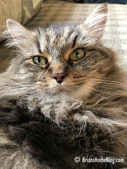 selfie zoe 12312017 - Brian's Home, adopt cats, we deserve it!