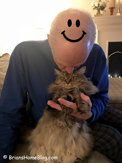 T.G.I.F. Zoe 12082017 - Brian's Home, adopt cats, we deserve it!