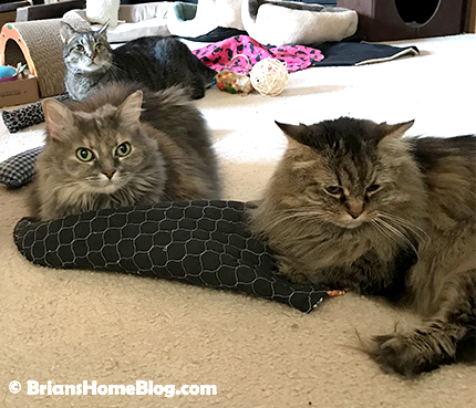thankful thursday blog hop brian 12212017 - Brian's Home, adopt cats, we deserve it!