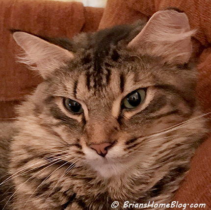 selfie simon 01212018 - Brian's Home, adopt cats, we deserve it!