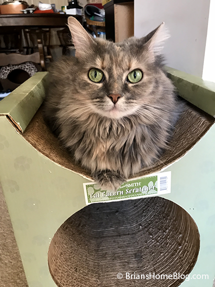sister saturday dolly 02032018 - Brian's Home, adopt cats, we deserve it!