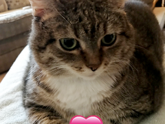 sister saturday gracie 01202018 - Brian's Home, adopt cats, we deserve it!