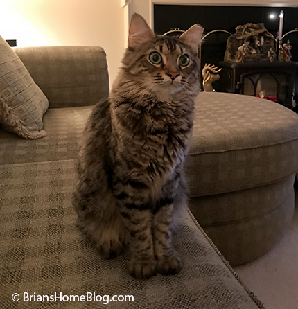 tabby tuesday simon 01092018 - Brian's Home, adopt cats, we deserve it!