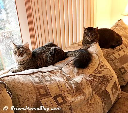 T.G.I.F. brian simon 01192018 - Brian's Home, adopt cats, we deserve it!