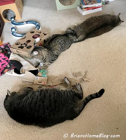 T.G.I.F. brian simon gracie 01122018 - Brian's Home, adopt cats, we deserve it!