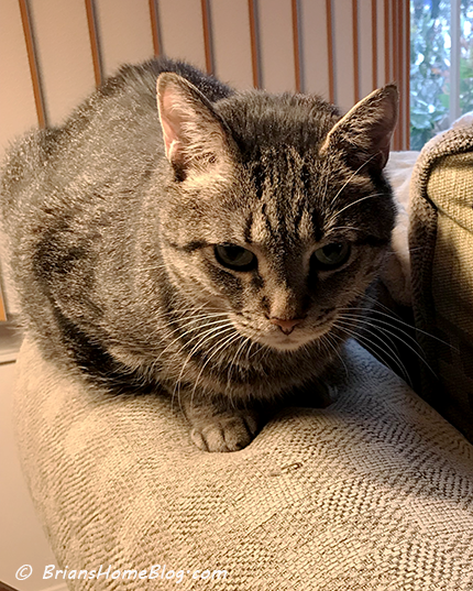 thankful thursday blog hop brian 01182018 - Brian's Home, adopt cats, we deserve it!