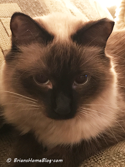 womancat wednesday whisker humps seal 01102018 - Brian's Home, adopt cats, we deserve it!