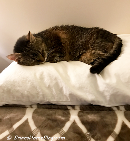 womancat wednesday wordless kit 01172018 - Brian's Home, adopt cats, we deserve it!