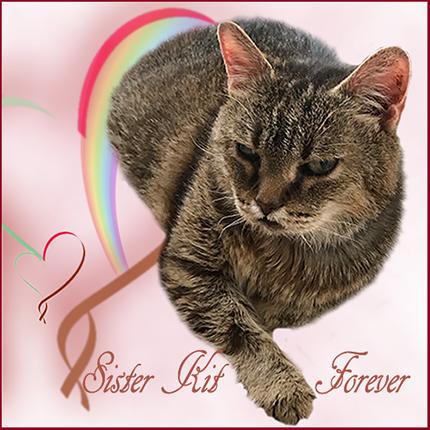 Sister Kit Forever