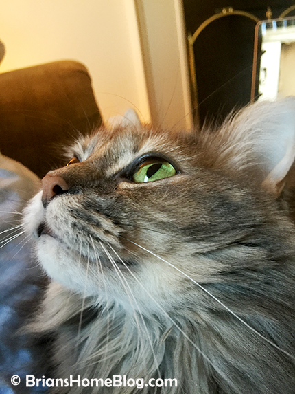 sister saturday dolly 03032018 - Brian's Home, adopt cats, we deserve it!