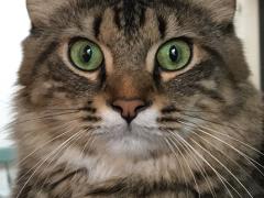 selfie simon 02112018 - Brian's Home, adopt cats, we deserve it!