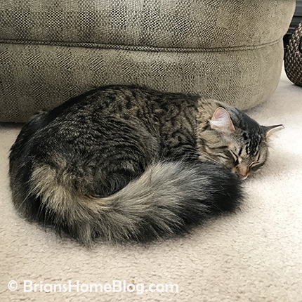 tabby tuesday simon 02202018 - Brian's Home, adopt cats, we deserve it!