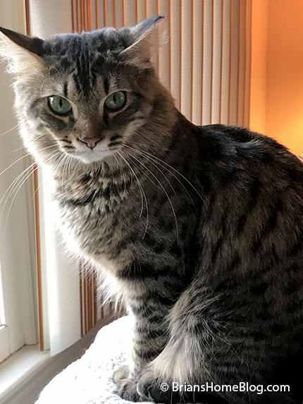 tabby tuesday simon 02062018 - Brian's Home, adopt cats, we deserve it!