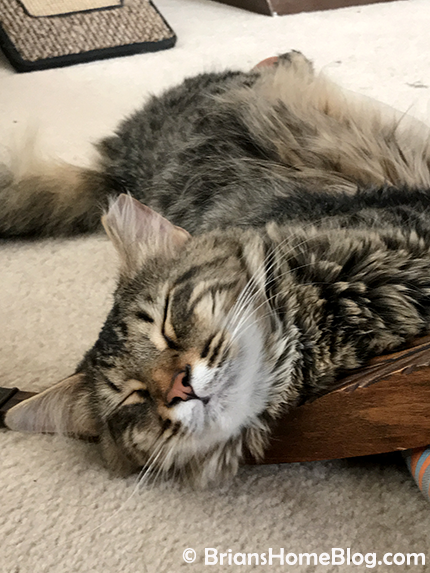 tabby tuesday simon 02272018 - Brian's Home, adopt cats, we deserve it!