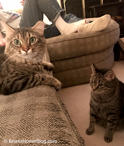 t.g.i.f. brian simon 02092018 - Brian's Home, adopt cats, we deserve it!