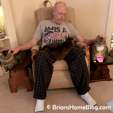 t.g.i.f. simon gracie 02232018 - Brian's Home, adopt cats, we deserve it!