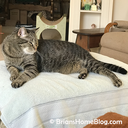 thankful thursday blog hop brian 02222018 - Brian's Home, adopt cats, we deserve it!