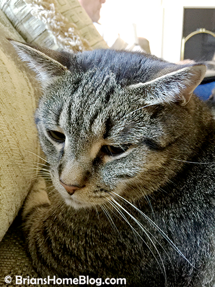 thankful thursday blog hop brian 03012018 - Brian's Home, adopt cats, we deserve it!