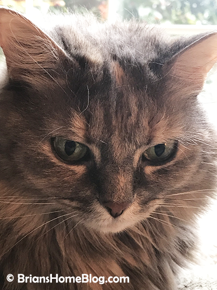 womancat whisker humps dolly 02142018 - Brian's Home, adopt cats, we deserve it!
