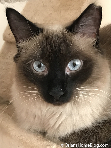 womancat wednesday whisker humps seal 02072018 - Brian's Home, adopt cats, we deserve it!