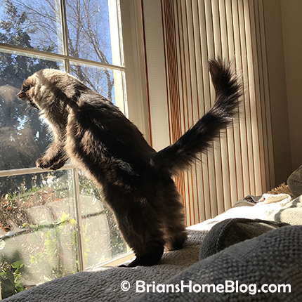 womancat wednesday wordless with sister seal 02142018 - Brian's Home, adopt cats, we deserve it!