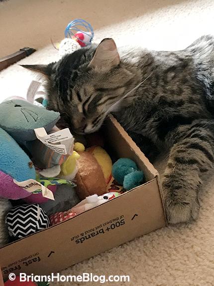easy simon 04082018 - Brian's Home, adopt cats, we deserve it!