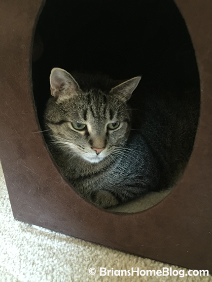 mancat monday brian 03192018 - Brian's Home, adopt cats, we deserve it!