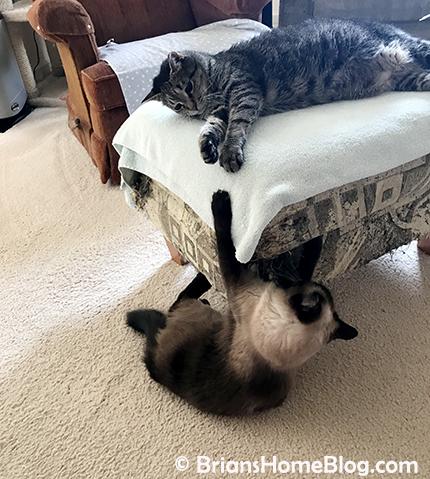 mancat monday brian seal 04022018 - Brian's Home, adopt cats, we deserve it!