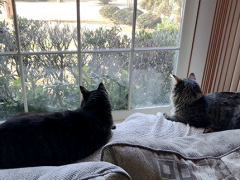 mancat monday brian simon 03122018 - Brian's Home, adopt cats, we deserve it!