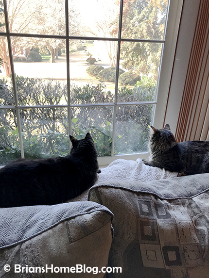 mancat monday brian simon 03122018 - Brian's Home, adopt cats, we deserve it!