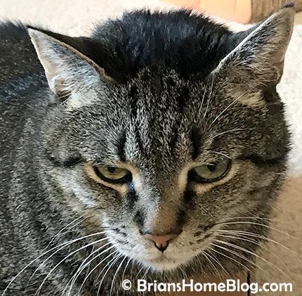 selfie brian 03252018 - Brian's Home, adopt cats, we deserve it!