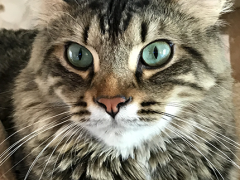 selfie simon 03182018 - Brian's Home, adopt cats, we deserve it!