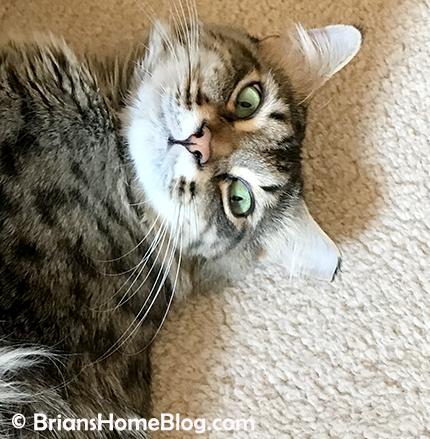 selfie simon 04082018 - Brian's Home, adopt cats, we deserve it!