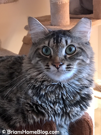 tabby tuesday simon 03062018 - Brian's Home, adopt cats, we deserve it!