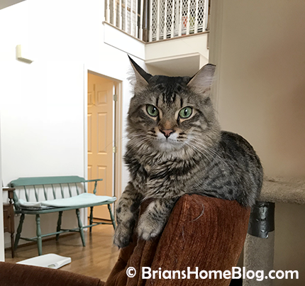 tabby tuesday simon 04032018 - Brian's Home, adopt cats, we deserve it!