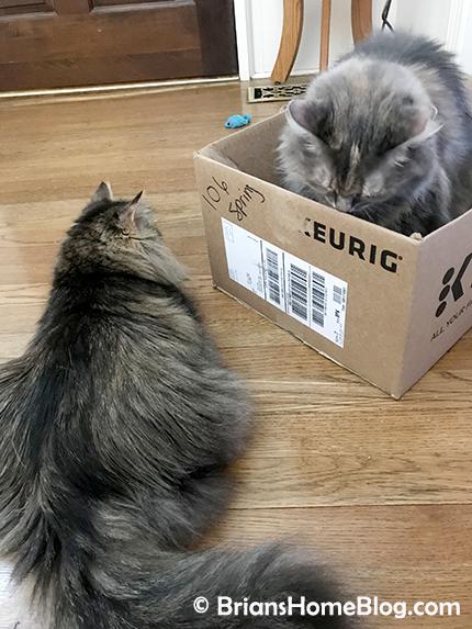 tgif zoe dolly 03302018 - Brian's Home, adopt cats, we deserve it!