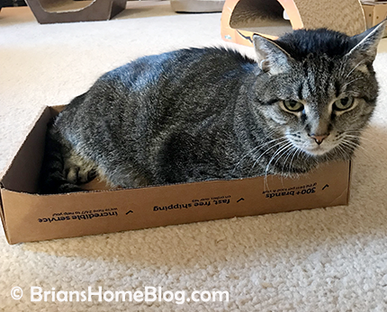thankful thursday blog hop brian 03082018 - Brian's Home, adopt cats, we deserve it!