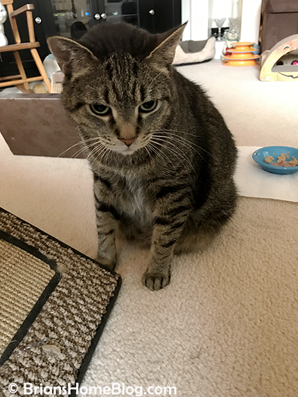 thankful thursday blog hop brian 03152018 - Brian's Home, adopt cats, we deserve it!