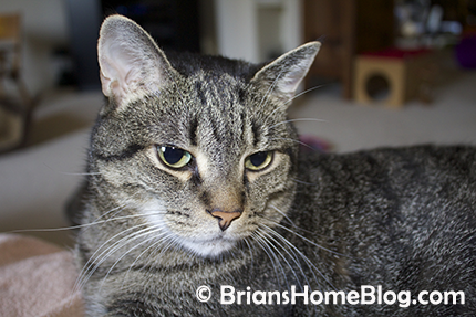 thankful thursday blog hop brian 03222018 - Brian's Home, adopt cats, we deserve it!