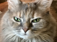 womancat wednesday whisker humps dolly 03212018 - Brian's Home, adopt cats, we deserve it!