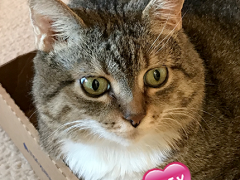 womancat wednesday whisker humps gracie 04042018 - Brian's Home, adopt cats, we deserve it!