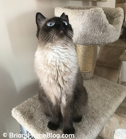 womancat wednesday whisker humps seal 03282018 - Brian's Home, adopt cats, we deserve it!