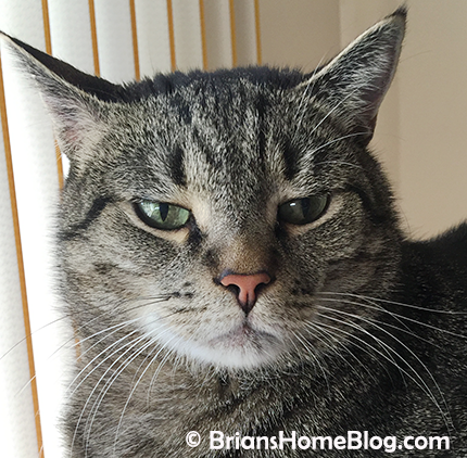 selfie brian 05062018 - Brian's Home, adopt cats, we deserve it!